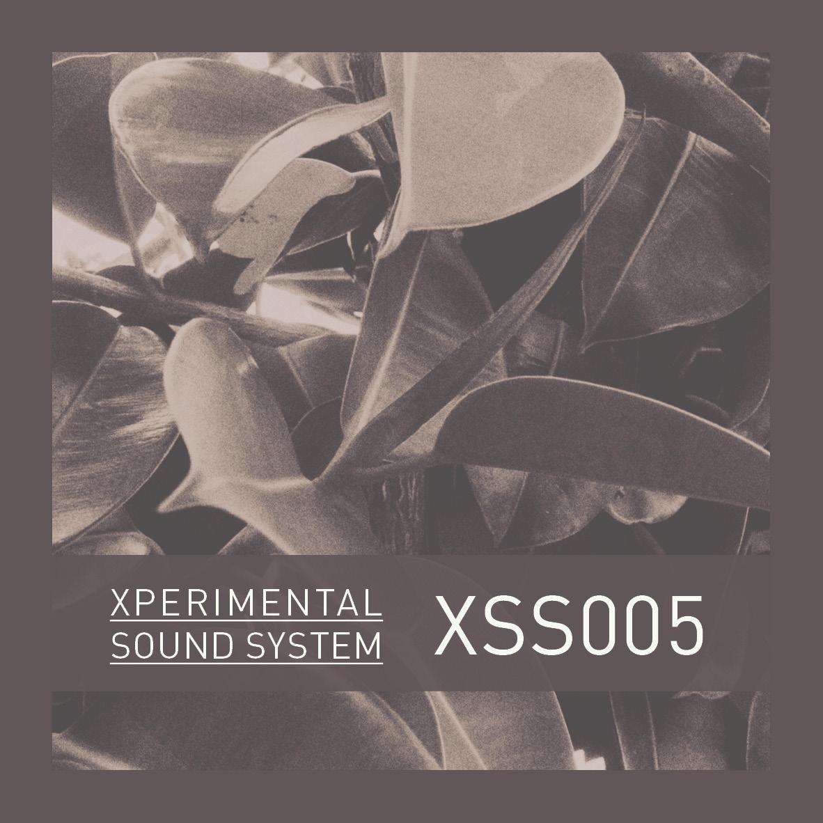 XSS005