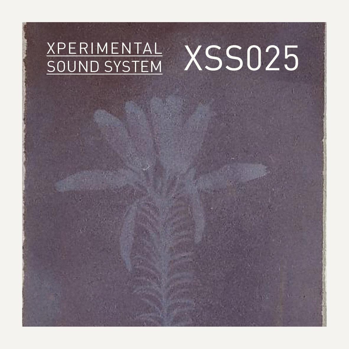XSS025