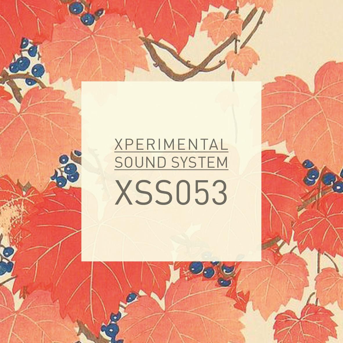 XSS053